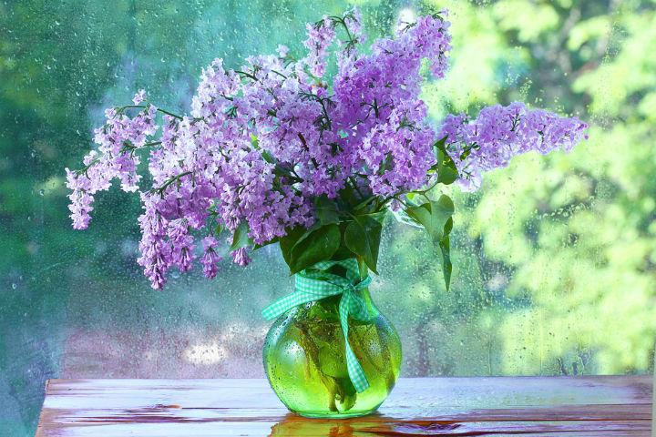 liliac, flori de liliac, legenda liliacului