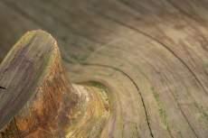 lemn, elementul lemn