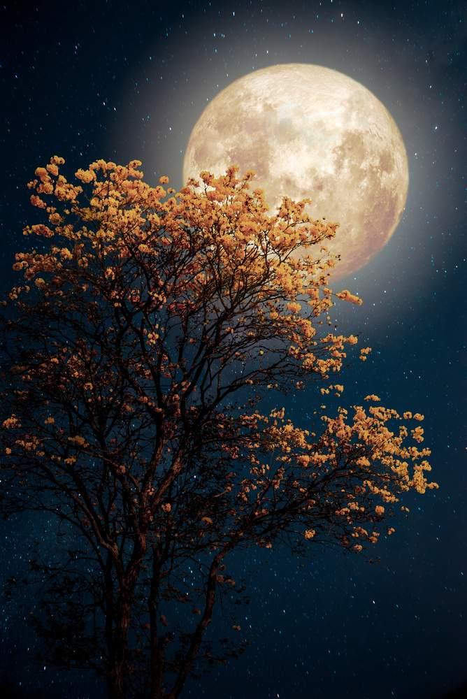 luna plina, luna florilor