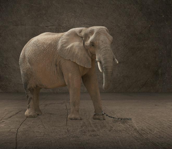 povestea elefantului
