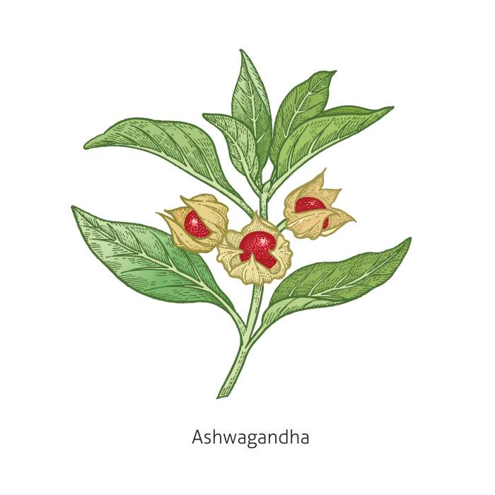 Withania somnifera, ashwagandha