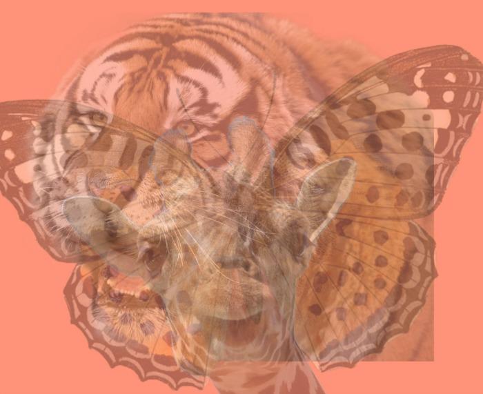 test psihologic, ce animal vezi primul, personalitate