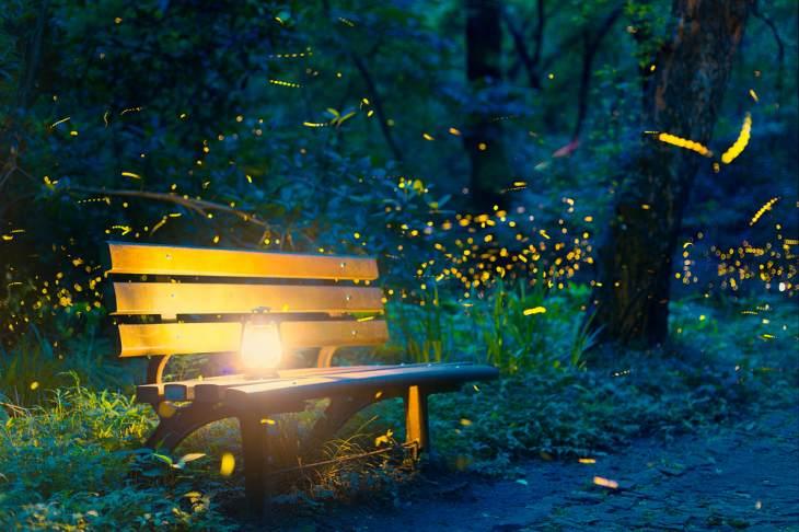 licurici, peisaje cu licurici, cum arata licuricii