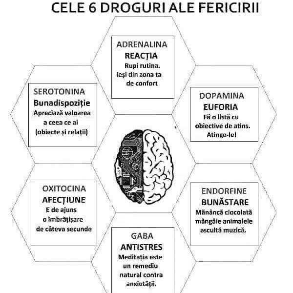 neurotransmitatorii si ce controleaza acestia