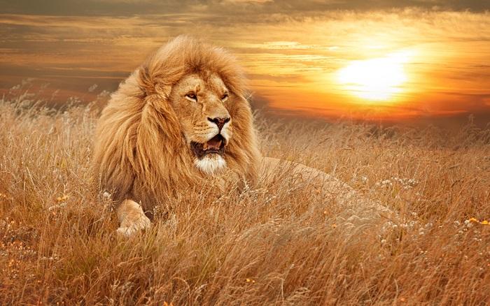 leul din tine