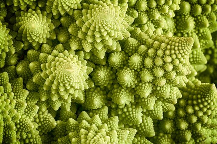 fractali din natura