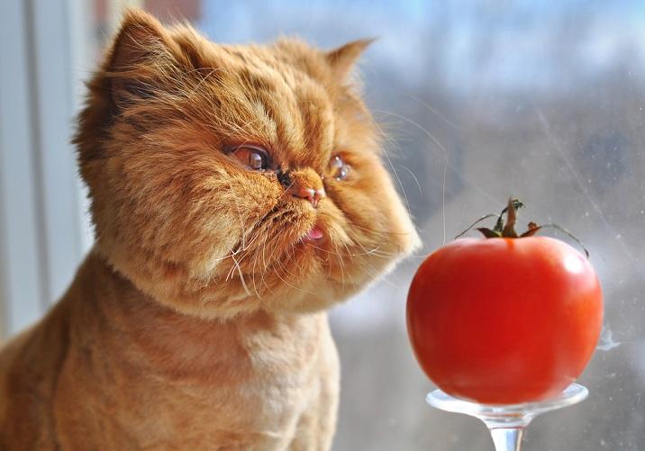 imagini amuzante cu pisici