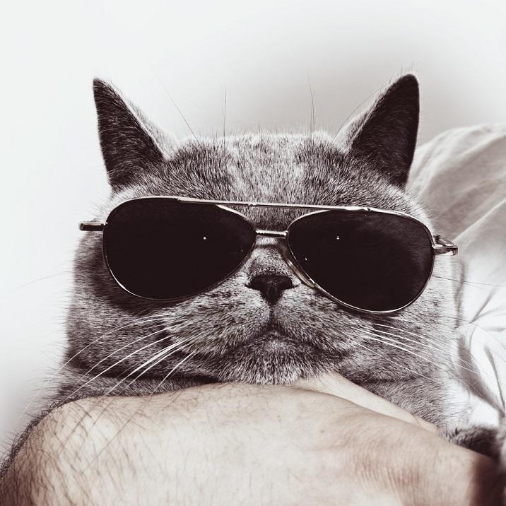 pisica cu ochelari