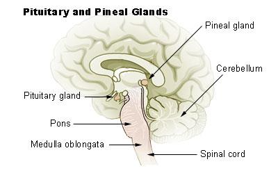 Secretele glandei pineale: Cum sa iti activezi AL TREILEA OCHI?