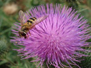 15 Tratamente naturiste pentru detoxifierea ficatului