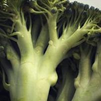 dieta vegetariana - broccoli contine calciu