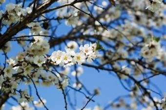 Traditii si  superstitii in duminica Floriilor