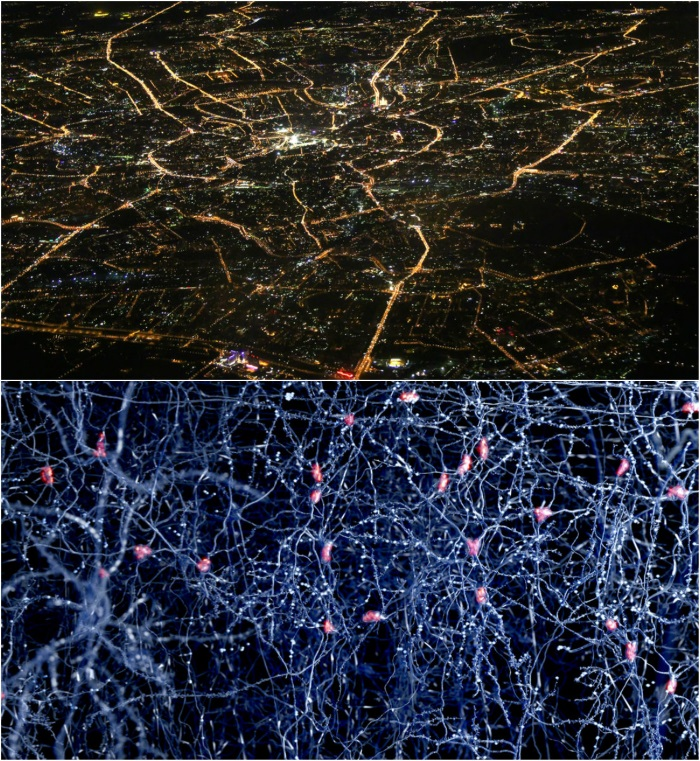 neuroni, oras, creier, cai neuronale