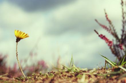 Drumul in viata nu este niciodata drept... - Cele 6 adevaruri spiritual-psihologice ale vietii