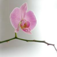 Orhideea, planta elegantei. Minighid de ingrijire