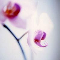 Orhideea, o planta cu frumusete si suflet. Cele mai bune metode de ingrijire!