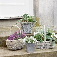 Secretul mirodeniilor: Cum sa ai o oaza de miresme in apartament
