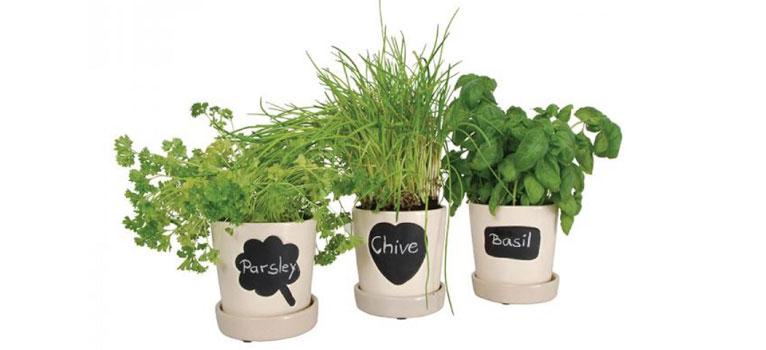 Util pentru plantele tale: 14 modele de ghivece