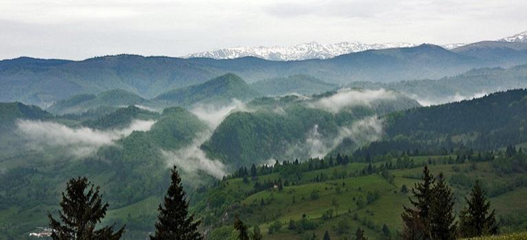 VESTI BUNE: Cel mai mare mamifer terestru din Europa se intoarce in Carpatii Meridionali
