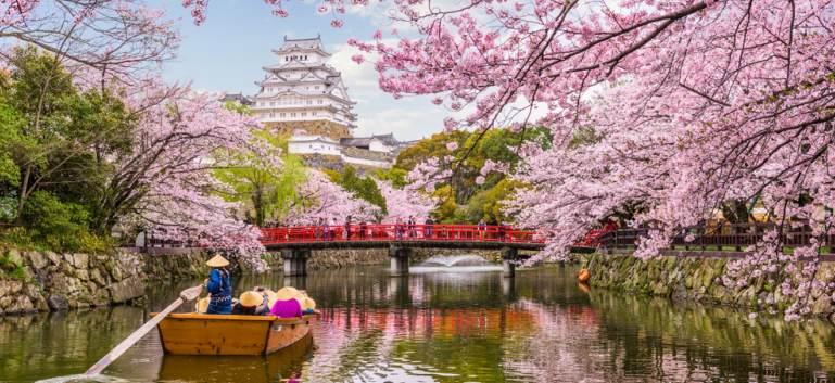 Vezi cum arata Primavara in Japonia: Ciresii infloriti sunt o magie!