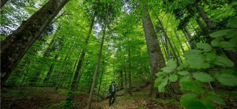 24.000 de hectare de paduri virgine din Romania au intrat in patrimoniul UNESCO