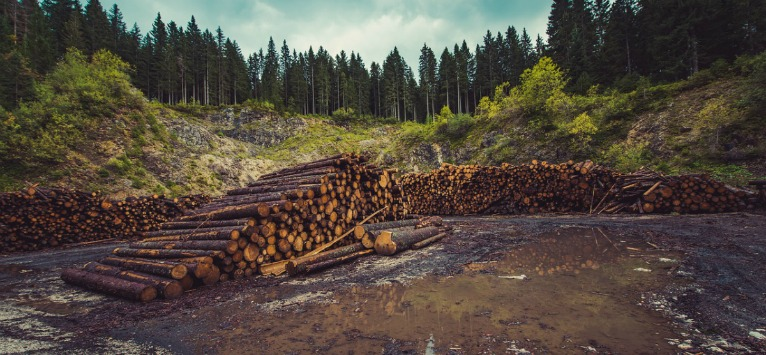 The Deforestation Beat: La fiecare 1.2 secunde un copac este tăiat!