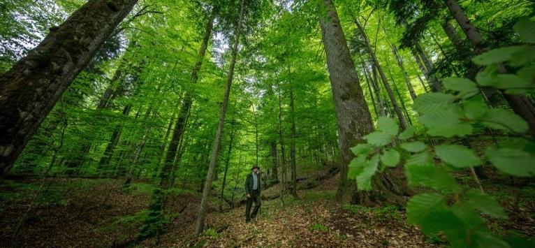 Codrii Seculari de la Strâmbu Băiuț – proiect de protejare a biodiversității