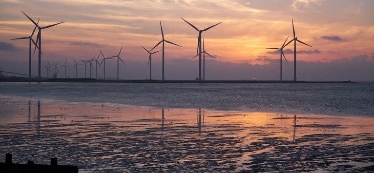 ONG-urile de mediu solicita Ministerului Energiei sa schimbe strategia dăunătoare pentru oameni și natură