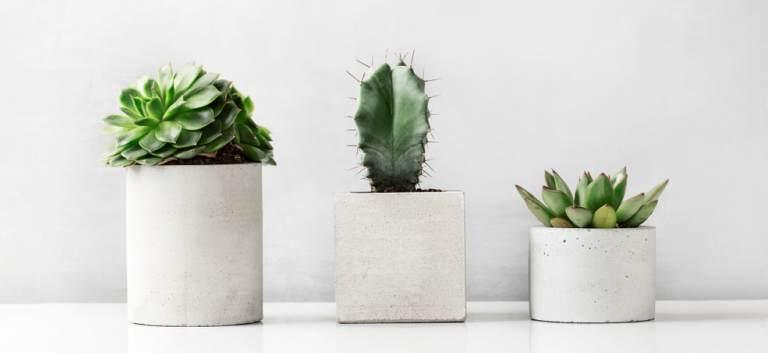 LEROY MERLIN - zeci de sortimente de flori la ghiveci, plante verzi, orhidee și cadouri florale speciale