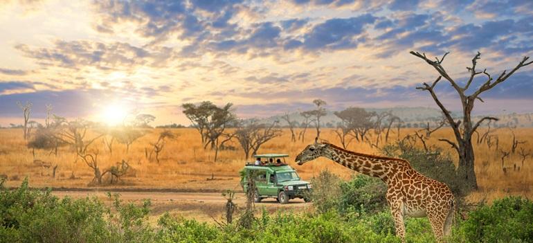 Cele mai interesante locuri în care putem călători pentru a vedea animale sălbatice în habitatul lor natural