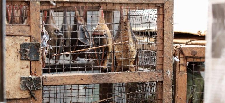 Pentru sănătatea noastră trebuie să stopăm comerțul ilegal cu animale sălbatice și tăierile ilegale de păduri