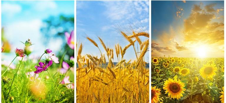 Vara -cel de-al treilea Rai al anului: 19 Imagini mirifice cu vara fermecata