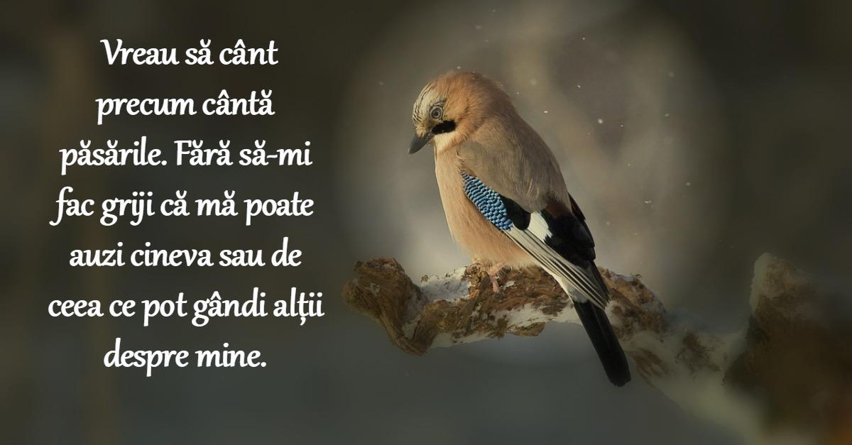rumi citate 33 de citate de Rumi care iti schimba viata rumi citate