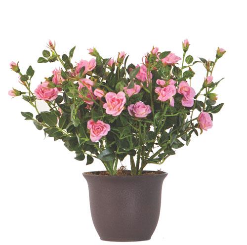 15 accesorii sic pentru a-ti transforma gradina intr-un spatiu de poveste: Planta Mini Rose