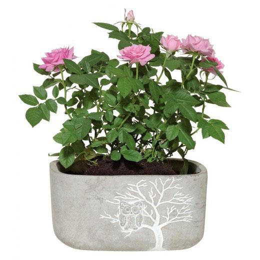 Util pentru plantele tale: 14 modele de ghivece: Ghiveci decorativ mare