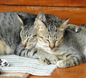 Numerologia felinelor: cifra numelui si adevarata personalitate a animalutului tau: Cum se calculeaza numarul reprezentativ pentru pisica ta