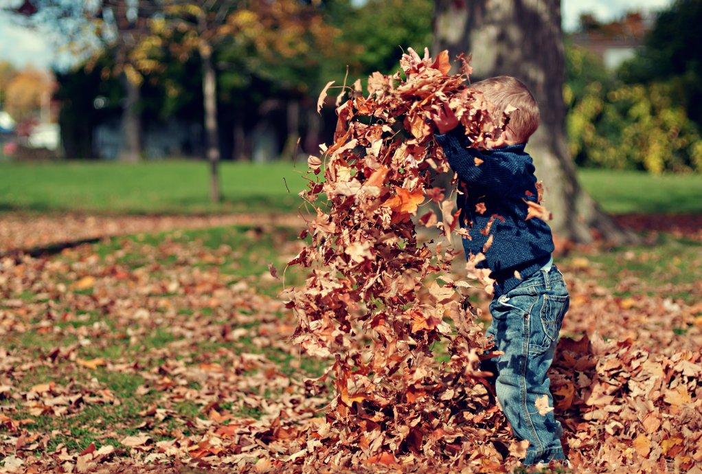 Toamna, esti minunata! 23 de imagini care ne aduc toamna in suflet ♥♥♥: Joaca cu frunze