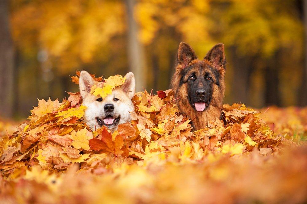 Toamna, esti minunata! 23 de imagini care ne aduc toamna in suflet ♥♥♥: Fericire in frunze