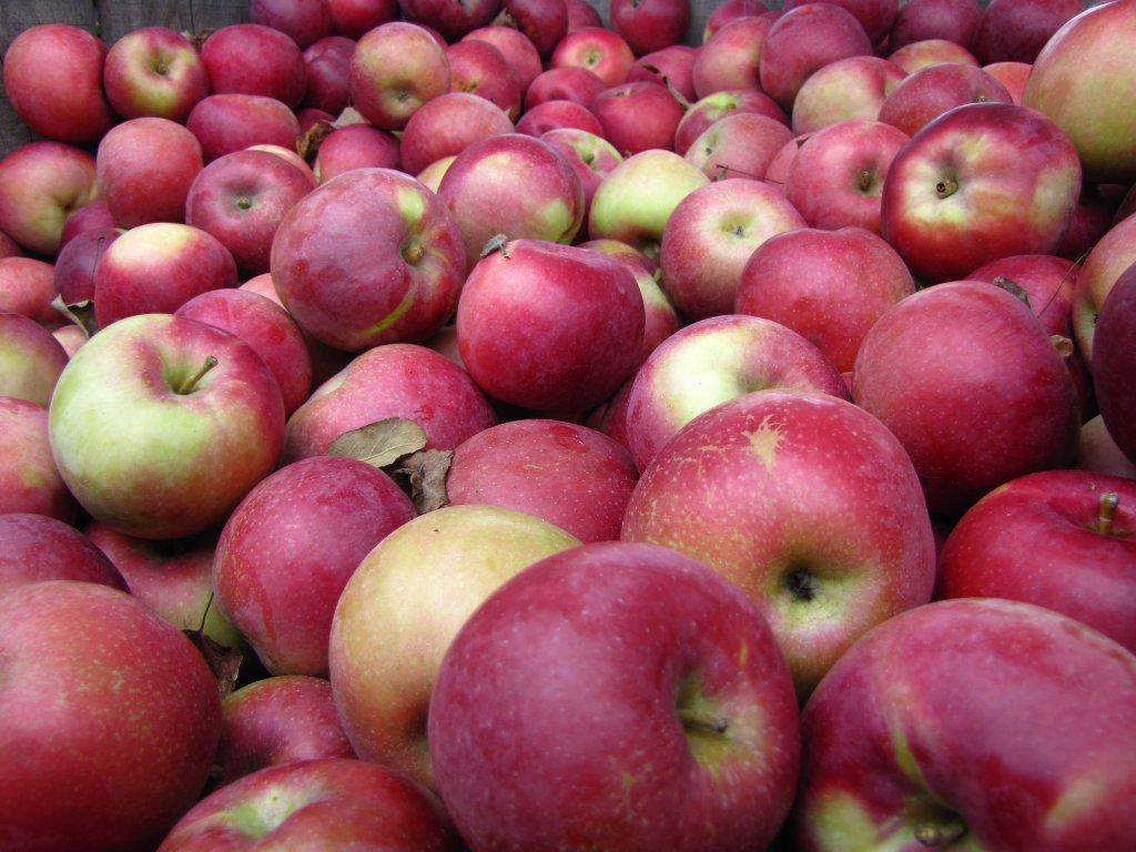 Toamna, esti minunata! 23 de imagini care ne aduc toamna in suflet ♥♥♥: Fructele vietii
