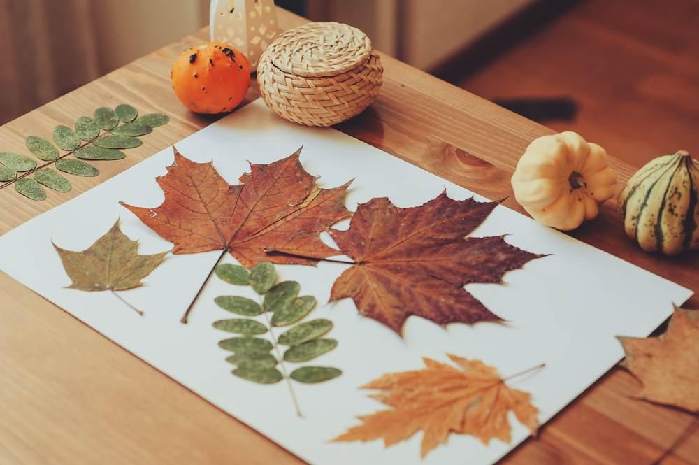 ATELIERUL DE CREATIE: 22 de idei pentru a realiza impreuna cu micutul tau adevarate Minunatii de Toamna: Ierbar cu frunze