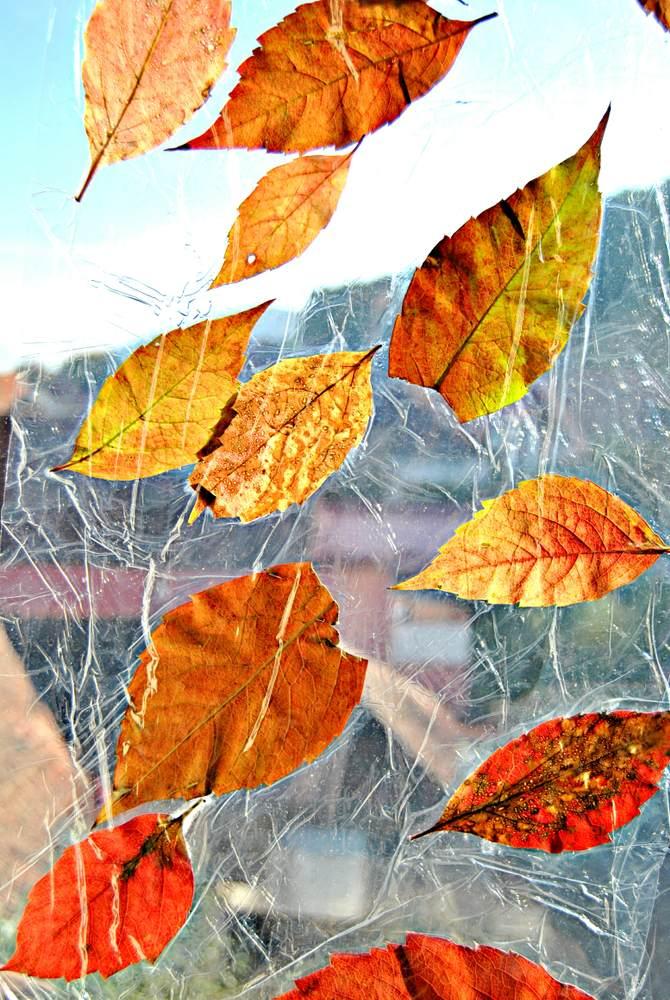 ATELIERUL DE CREATIE: 22 de idei pentru a realiza impreuna cu micutul tau adevarate Minunatii de Toamna: Frunze lipite pe geam