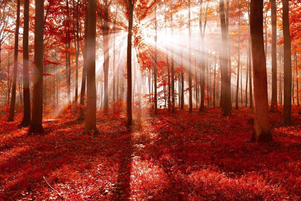 Toamna de o frumusete rara: 16 imagini cu Paduri fermecate, desprinse parca din povesti: Planeta rosie