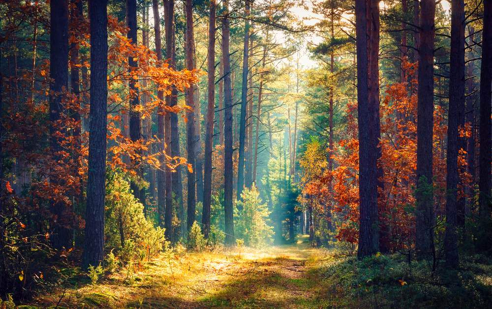 Toamna de o frumusete rara: 16 imagini cu Paduri fermecate, desprinse parca din povesti: Dimineata cu magie si raze de soare