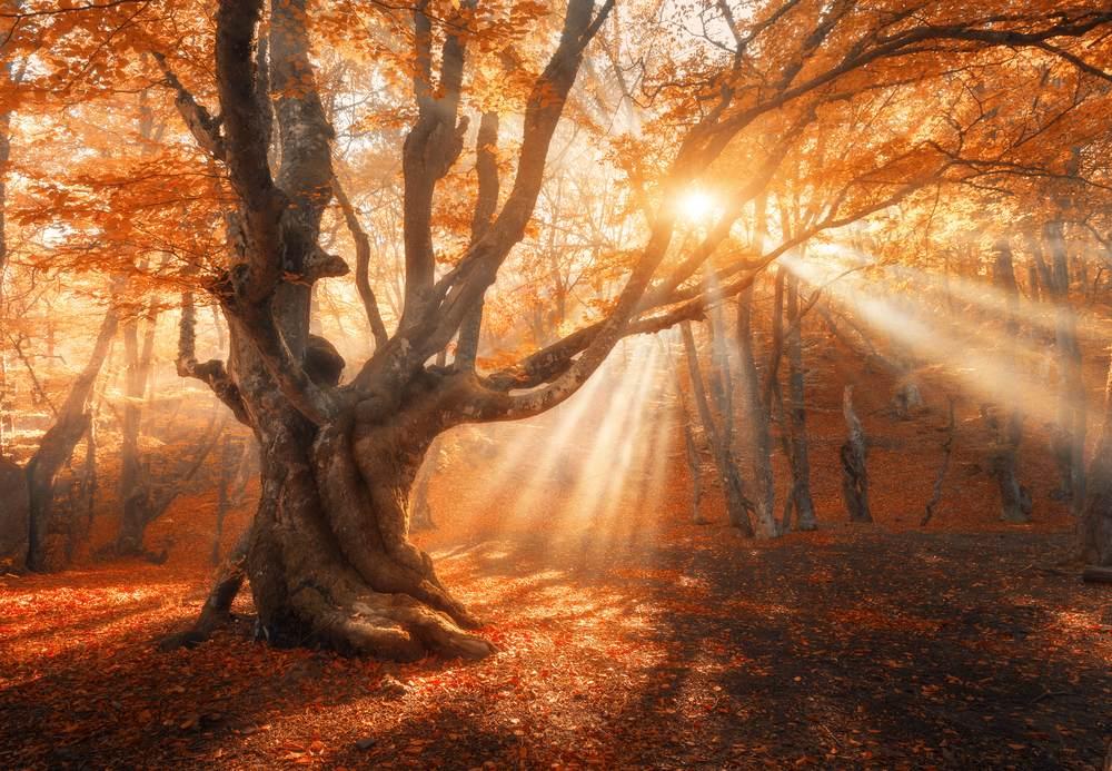Toamna de o frumusete rara: 16 imagini cu Paduri fermecate, desprinse parca din povesti: Copacul fermecat
