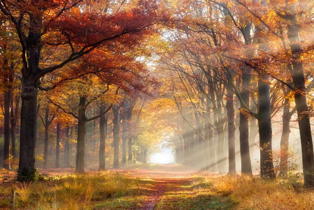 Toamna de o frumusete rara: 16 imagini cu Paduri fermecate, desprinse parca din povesti: Razele soarelui isi fac loc printre frunzele copacilor