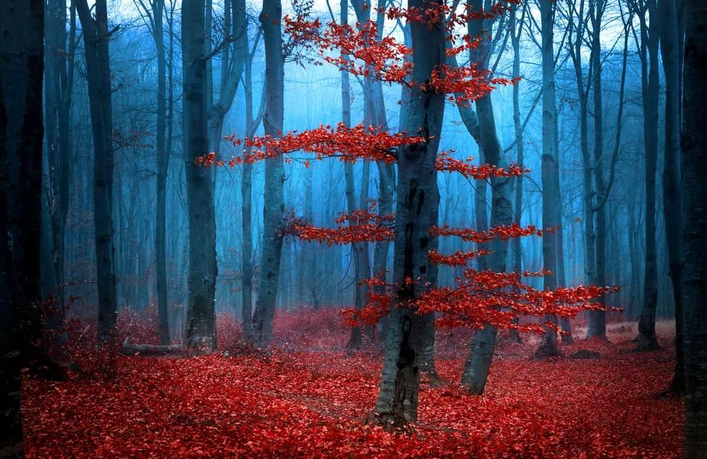 Toamna de o frumusete rara: 16 imagini cu Paduri fermecate, desprinse parca din povesti: Zi cu ceata in padure