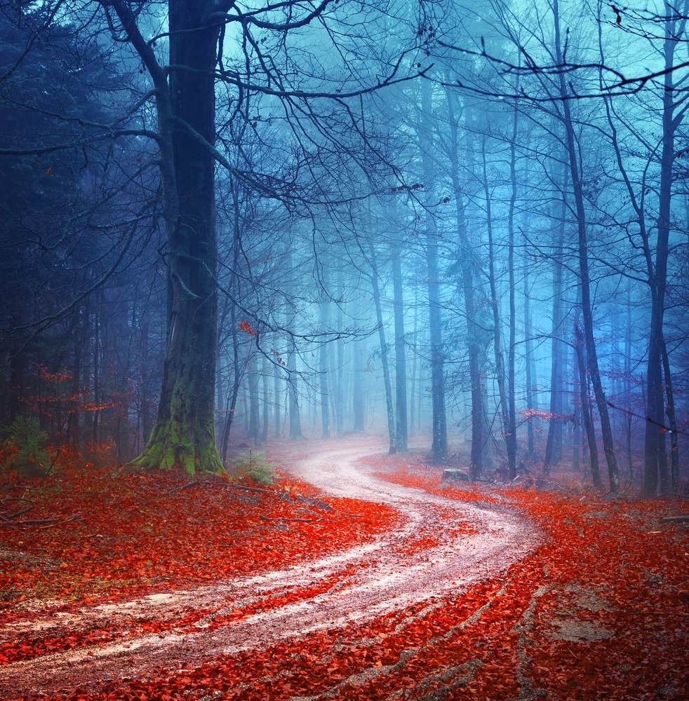 Toamna de o frumusete rara: 16 imagini cu Paduri fermecate, desprinse parca din povesti: Peisaj de toamna parca suprarealist