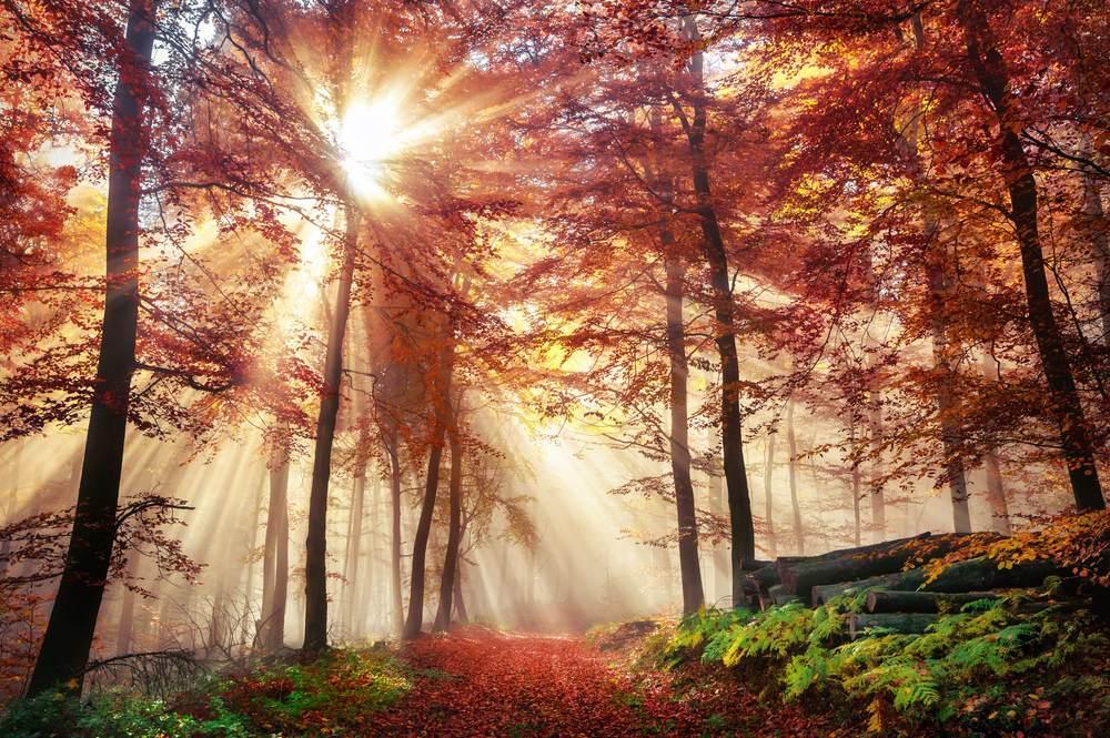 Toamna de o frumusete rara: 16 imagini cu Paduri fermecate, desprinse parca din povesti: Ceata, soare, frunze vii si moarte si padurea prinde viata