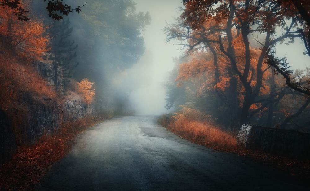 Toamna de o frumusete rara: 16 imagini cu Paduri fermecate, desprinse parca din povesti: Padurea isi ascunde misterele mai bine toamna
