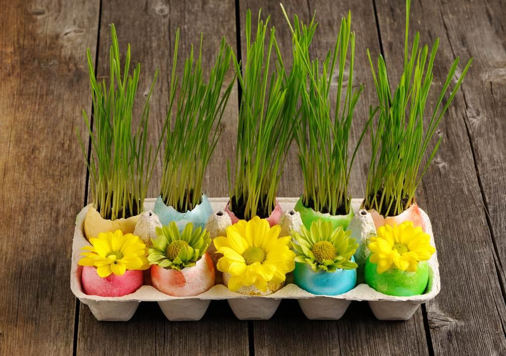Idei super creative pentru masa de Paști: 17 Decorațiuni din Ouă și Coji de ouă: Cofraj de oua cu oua decorate cu flori si oua cu grau verde in pamant